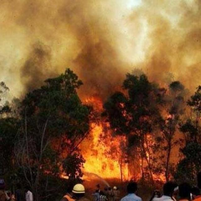 TN FOREST FIRE : GUIDE ARRESTED
